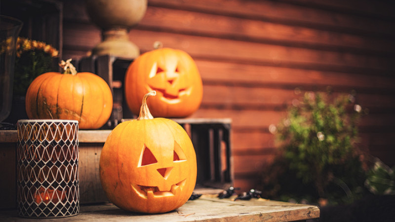 How to Make Your Magento Store Halloween Ready?